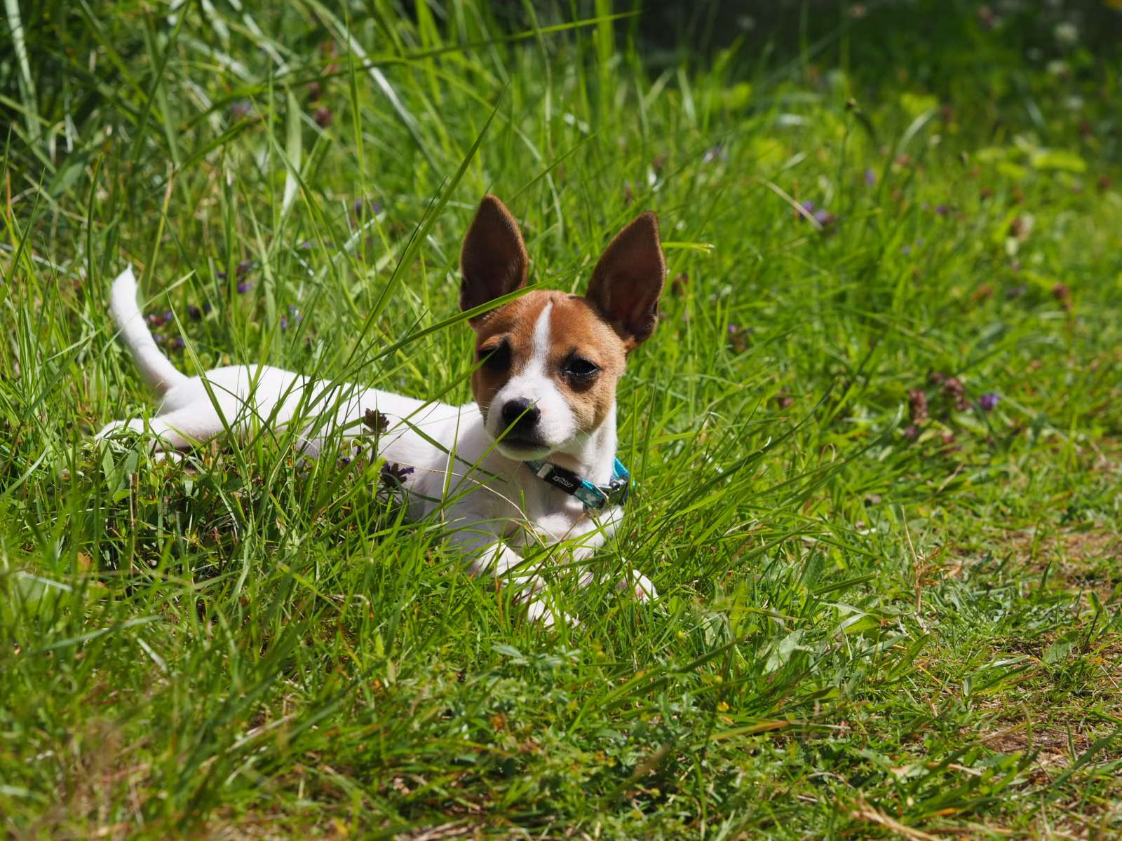 Uskalsin ottaa koiran – mitä se kertoo työnantajastani